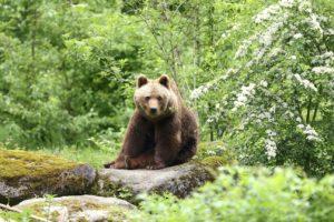 Foto: Tierpark Hellabrunn / Ellinor Fischer
