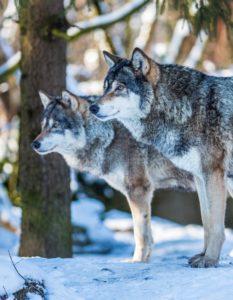 Foto: Tierpark Hellabrunn / BihlerPhotography
