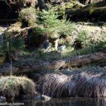 Erste Frühlingsstrahlen im Nationalpark bayerischer Wald