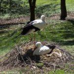 Unser Tag im Vogelpark Irgenöd bei Ortenburg
