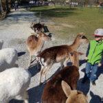 Die Ersten Frühling-strahlen im Wildpark Ortenburg genießen