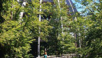 In den Wipfel der Bäume. Der  Baumwipfelweg bayerischer Wald